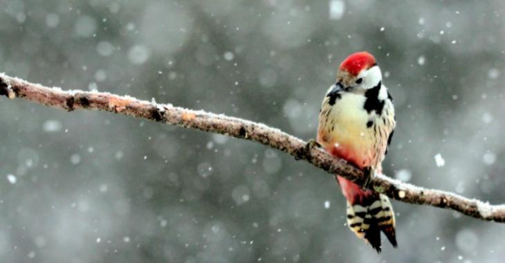 La première neige est DÉJÀ tombée sur une région du Québec !!!