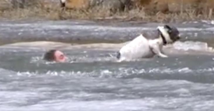 Un courageux Canadien tente de sauver son chien de la noyade | DERNIÈRE HEURE