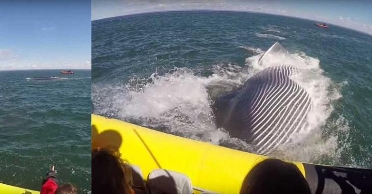 Une baleine provoque la terreur de touristes français sur le fleuve St-Laurent!