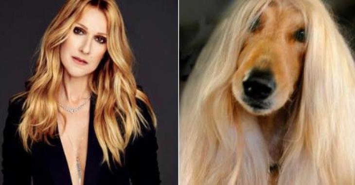 Des photos d'un chien qui ressemble comme deux gouttes d'eau à Céline Dion deviennent virales